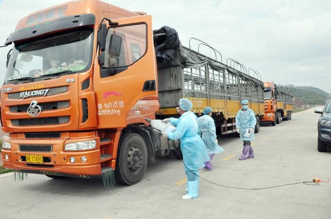 Quảng Ninh: Mở hơn 300 tờ khai XNK qua lối mở cầu phao tạm Km3+4 - Ảnh 2.