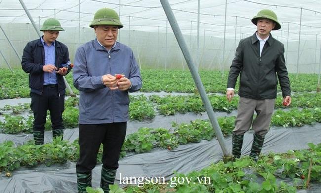 Lạng Sơn: Quan tâm đầu tư phát triển các mô hình HTX nông nghiệp, chăn nuôi  - Ảnh 2.
