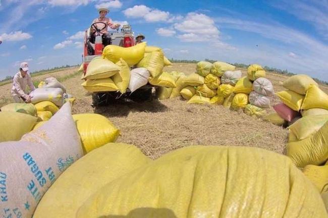 Bộ Công Thương hé lộ lý do đưa ra đề xuất tạm dừng xuất khẩu gạo - Ảnh 1.