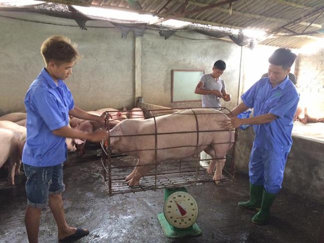 Dự kiến cận Tết 2021, người dân mới có thể mua thịt lợn 60.000/kg - Ảnh 1.