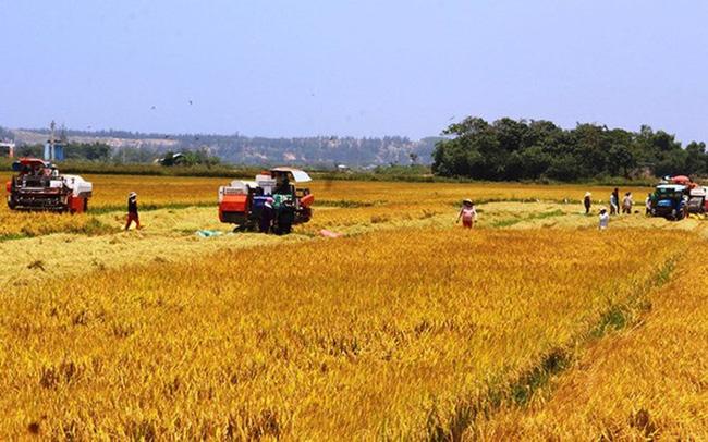 Bội thu vụ đông xuân, đề nghị cho xuất gạo trở lại - Ảnh 1.