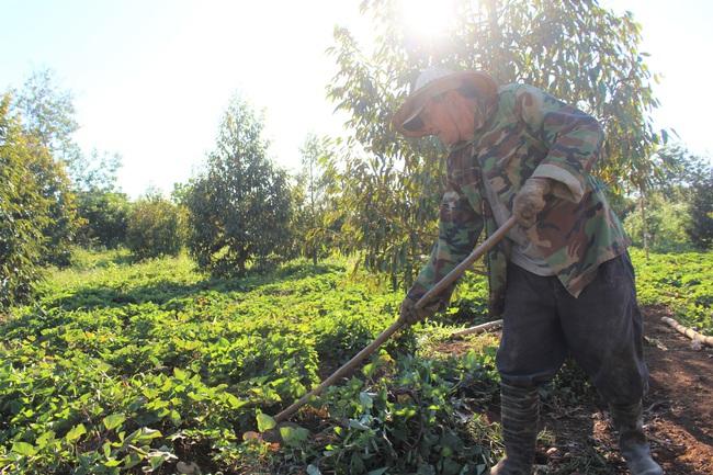 Tận dụng đất vườn nuôi trăm con heo dài đòn, đầu nhỏ, lão nông Đắk Lắk mỗi tháng dằn túi 30 triệu đồng - Ảnh 4.