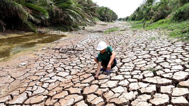Giá gạo thế giới leo thang khi xuất khẩu gạo Việt Nam, Thái Lan giảm mạnh vì hạn hán - Ảnh 1.