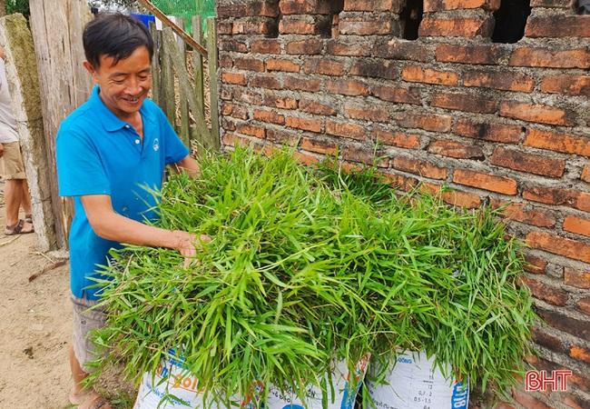 Nông dân đầu tiên ở Hà Tĩnh nuôi bò đực sữa của Tập đoàn TH True Milk - Ảnh 9.