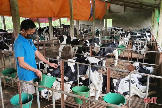 Nông dân đầu tiên ở Hà Tĩnh nuôi bò đực sữa của Tập đoàn TH True Milk - Ảnh 2.