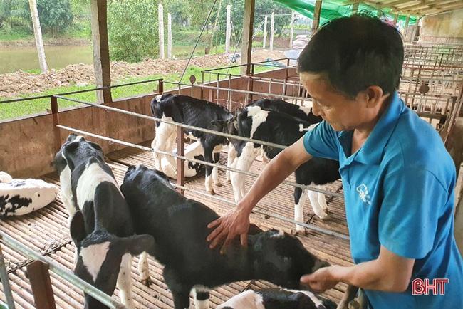 Nông dân đầu tiên ở Hà Tĩnh nuôi bò đực sữa của Tập đoàn TH True Milk - Ảnh 4.