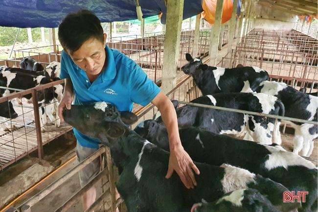 Nông dân đầu tiên ở Hà Tĩnh nuôi bò đực sữa của Tập đoàn TH True Milk - Ảnh 5.