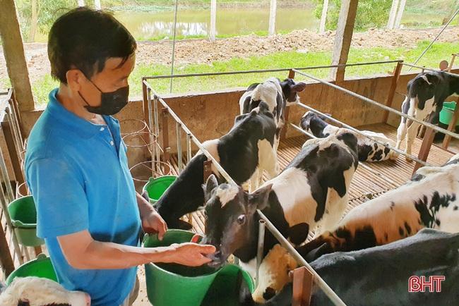 Nông dân đầu tiên ở Hà Tĩnh nuôi bò đực sữa của Tập đoàn TH True Milk - Ảnh 7.