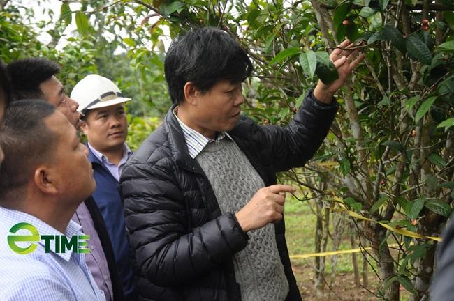"""""""Lão khùng"""" mang thứ hoa vàng trên núi về trồng bán 15 triệu/kg - Ảnh 3."""