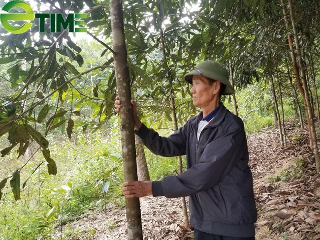 Lạng Sơn: Xây dựng vùng trồng quế, hồi hữu cơ xuất khẩu  - Ảnh 1.