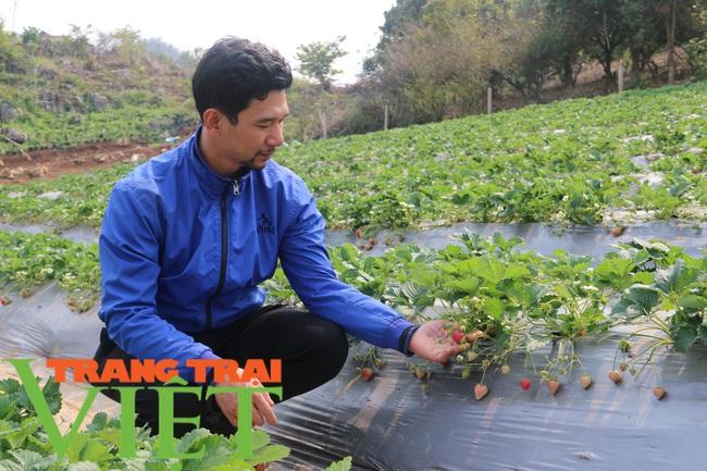 Mộc Châu phát triển nông nghiệp hữu cơ, hướng đi bền vững cho nông dân  - Ảnh 1.