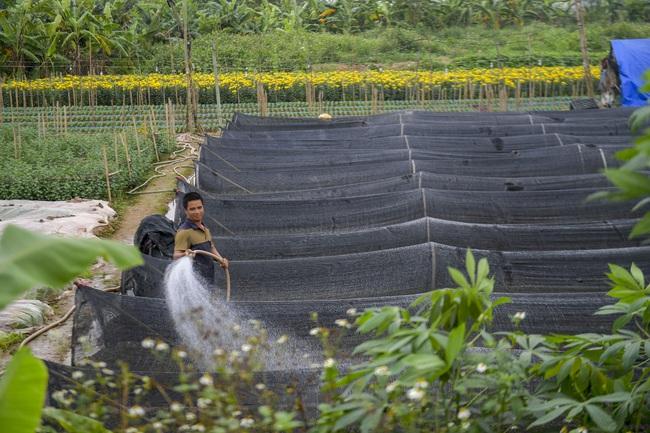 Hà Nội: Xót xa nông dân trồng hoa bỏ ruộng hoang chờ qua dịch Covid-19 - Ảnh 12.