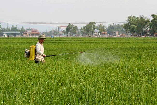 Sâu bệnh hại lúa Đông Xuân tăng cao, Bộ NN&PTNT họp trực tuyến để phòng ngừa - Ảnh 1.
