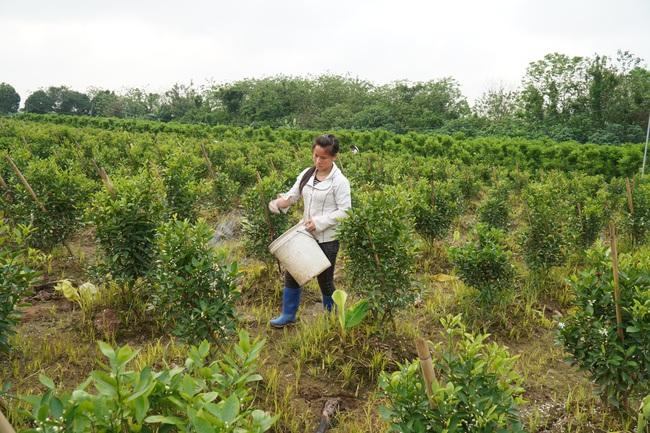 Dự án sân golf quốc tế Thuận Thành: Diện tích xây dựng không vượt quá 5% bãi sông!  - Ảnh 3.