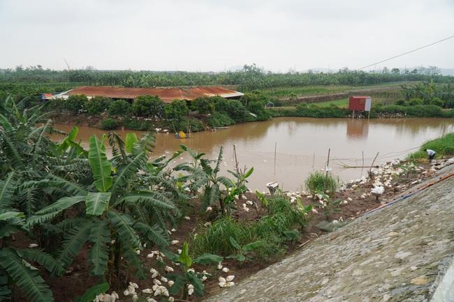 Dự án sân golf quốc tế Thuận Thành: Diện tích xây dựng không vượt quá 5% bãi sông!  - Ảnh 1.