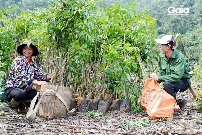 Trồng 2.000 cây gỗ lớn nhân Ngày của Mẹ - Ảnh 1.