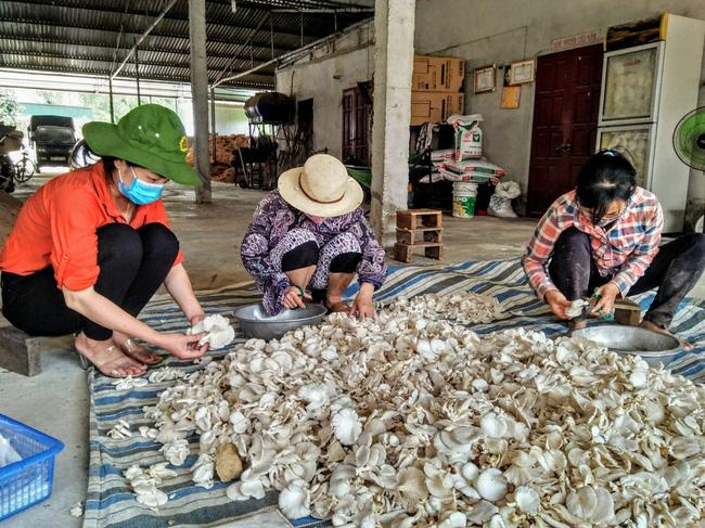 Cựu chiến binh trồng 3 loại nấm, thu nhập 800 triệu đồng mỗi năm   - Ảnh 2.