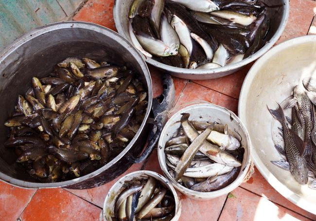 Bắt cá đồng mùa khô nơi đất Mũi  - Ảnh 5.