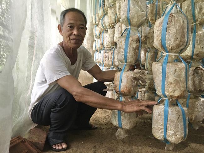 Đà Nẵng: Cựu binh khởi nghiệp ở tuổi 60, thành công bất ngờ với nấm - Ảnh 1.