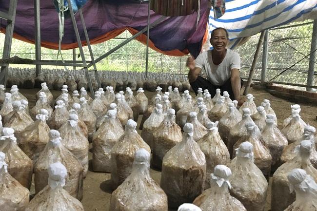 Đà Nẵng: Cựu binh khởi nghiệp ở tuổi 60, thành công bất ngờ với nấm - Ảnh 2.