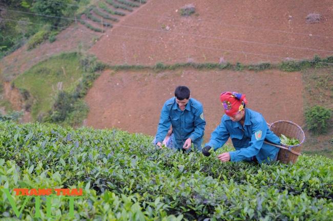 Hiệu quả từ nguồn Quỹ Hỗ trợ nông dân Thuận Châu - Ảnh 4.
