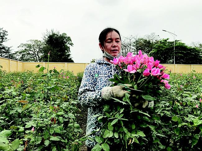 3 bước đột phá của nông nghiệp Thủ đô  - Ảnh 1.