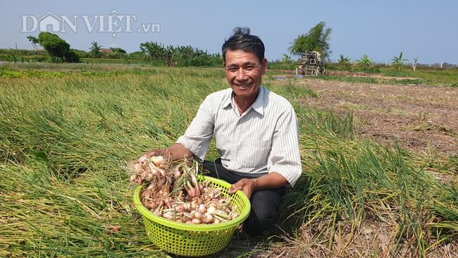 Nam Định: Đinh lăng giá rẻ như cho, bán đi chỉ đủ tiền thuê người làm cỏ - Ảnh 3.