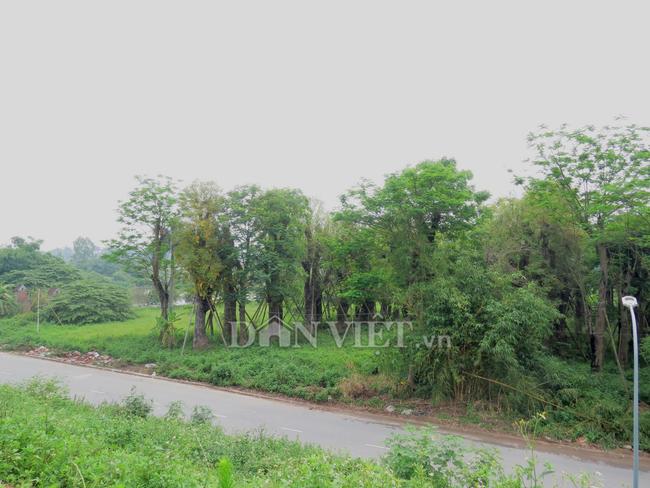 Bất ngờ lớn về doanh nghiệp bỏ rơi 106 cây xanh dự án đường sắt trên cao Nhổn - Ga Hà Nội? - Ảnh 1.