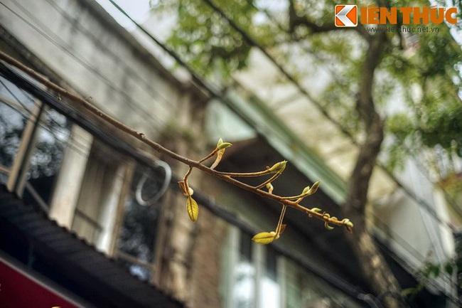 Phố hóa chất nổi tiếng Hà Nội trăm năm trước là phố nào? - Ảnh 16.