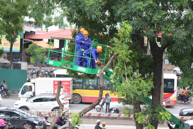 Bất ngờ lớn về doanh nghiệp bỏ rơi 106 cây xanh dự án đường sắt trên cao Nhổn - Ga Hà Nội? - Ảnh 7.