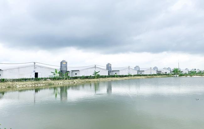 Nâng cao vị thế ngành gia cầm Việt Nam, hướng tới xuất khẩu - Ảnh 4.
