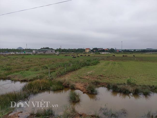 Quảng Ninh: Dân nghèo trồng lúa trên đất bỏ không, chính quyền phạt hàng trăm triệu - Ảnh 4.