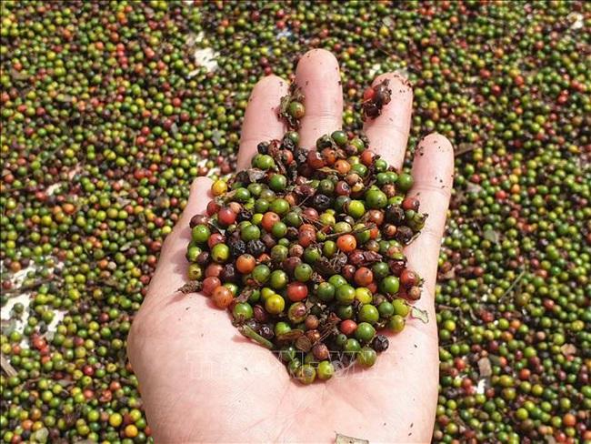 Trung Quốc tăng mua các loại hạt tiêu, giá tiêu hôm nay tăng 1.000 đồng/kg - Ảnh 1.