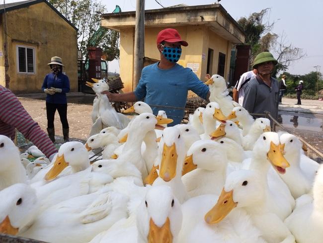 Giá gia cầm hôm nay 23/5: Vịt thịt chững giá, gà công nghiệp đắt hàng - Ảnh 1.
