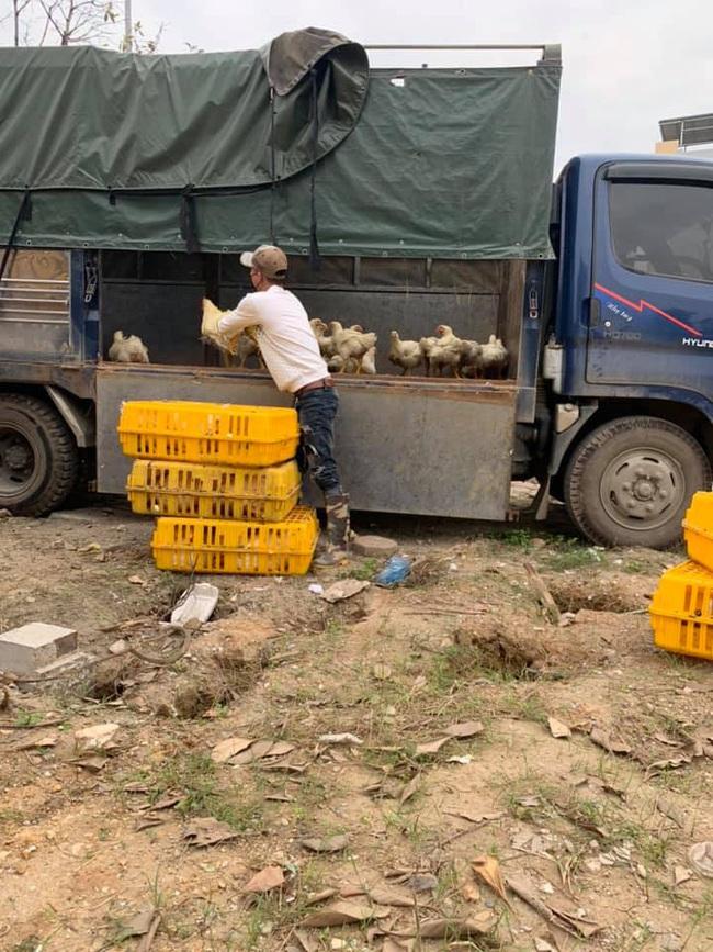 Giá gia cầm hôm nay 23/5: Vịt thịt chững giá, gà công nghiệp đắt hàng - Ảnh 2.