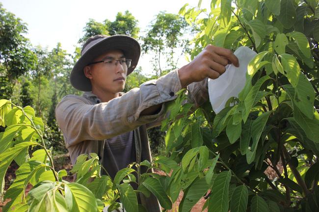 Làm thuận tự nhiên, khu vườn ở Đắk Lắk sống khỏe giữa mùa khô hạn - Ảnh 2.