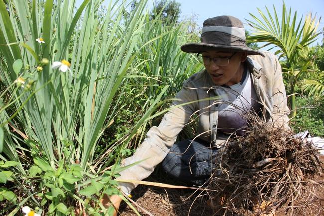 Làm thuận tự nhiên, khu vườn ở Đắk Lắk sống khỏe giữa mùa khô hạn - Ảnh 1.