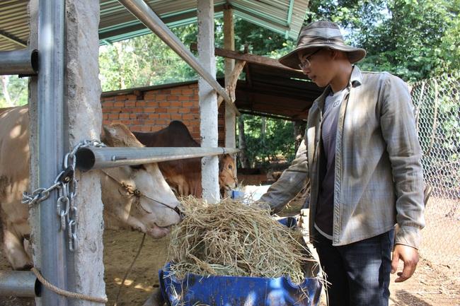 Làm thuận tự nhiên, khu vườn ở Đắk Lắk sống khỏe giữa mùa khô hạn - Ảnh 5.