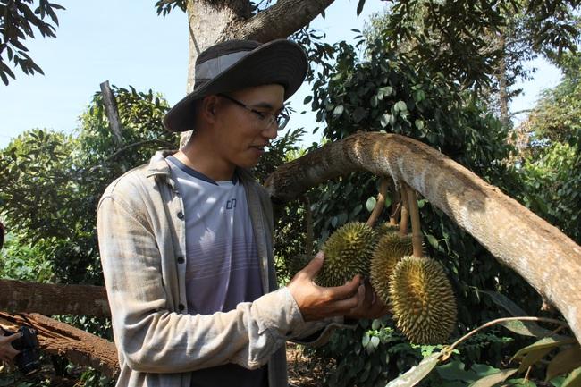 Làm thuận tự nhiên, khu vườn ở Đắk Lắk sống khỏe giữa mùa khô hạn - Ảnh 7.