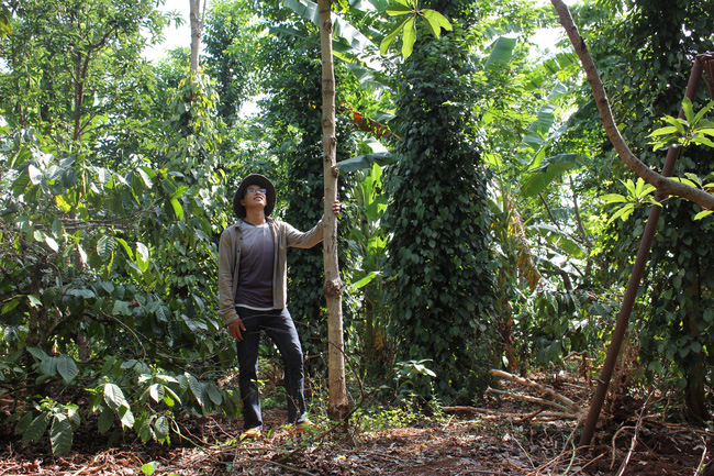 Làm thuận tự nhiên, khu vườn ở Đắk Lắk sống khỏe giữa mùa khô hạn - Ảnh 6.