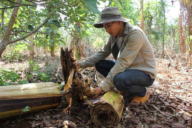 Làm thuận tự nhiên, khu vườn ở Đắk Lắk sống khỏe giữa mùa khô hạn - Ảnh 8.
