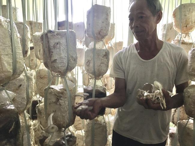 Đà Nẵng: Cựu binh khởi nghiệp ở tuổi 60 và thành công bất ngờ. - Ảnh 5.