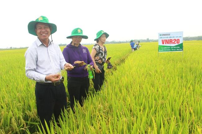 Ứng dụng cơ giới hóa đồng bộ, trồng lúa lãi cao - Ảnh 1.