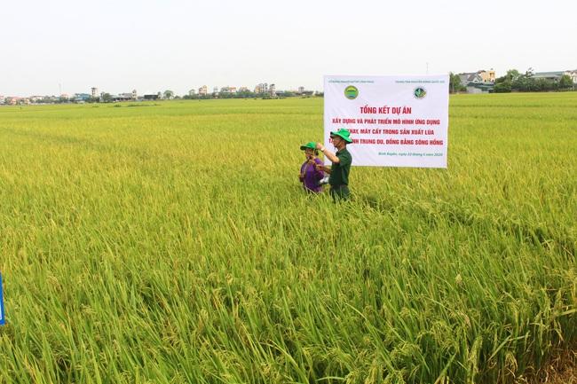 Ứng dụng cơ giới hóa đồng bộ, trồng lúa lãi cao - Ảnh 2.