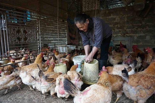 Nhà nông đau đầu lo giữ đàn gia cầm mùa nóng