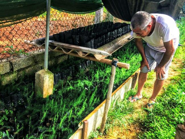 Nghệ An: Lão nông trồng măng tây mỗi ngày đút túi gần 1 triệu đồng   - Ảnh 1.