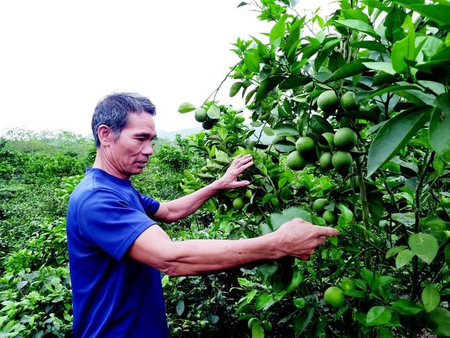 Lão nông xứ Tuyên giỏi sáng chế, làm giàu từ vườn đồi - Ảnh 3.