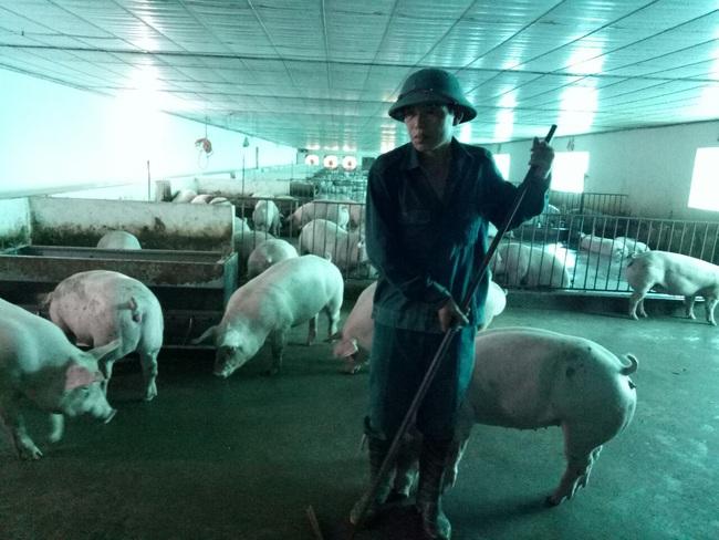 Bỏ túi đều tay 4-5 triệu đồng/con, lão nông nuôi lợn thấy áy náy - Ảnh 3.