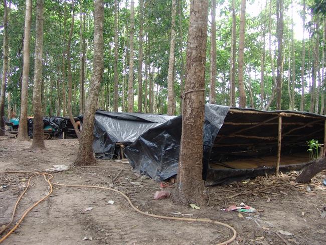 Độc đáo: Nông trại nuôi cá bằng ruồi lính đen đắt đỏ - Ảnh 2.