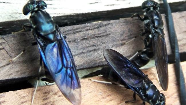Độc đáo: Nông trại nuôi cá bằng ruồi lính đen đắt đỏ - Ảnh 3.